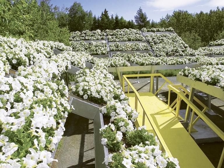 La tête dans les nuages, Jardins de Métis, Grand Métis, Québec, 2004-2005