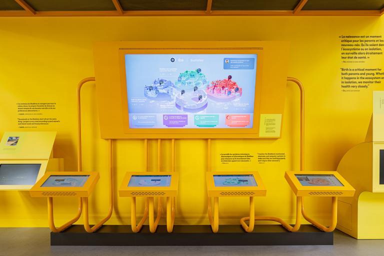 Biodôme, installation interactive, Montréal, 2020